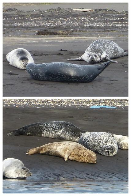 Island 2014 2014-09-0139