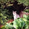 "Johan in his ""woods."" #cats #catsofinstagram #bushes #green"