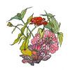 zinndala mandalas ink watercolor floral chriscarterartist 092314 600
