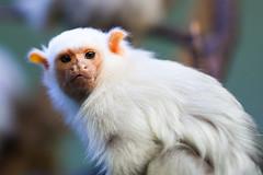 twycross zoo  -3131