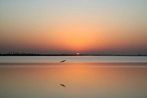 dawn bird reflex saloum saloumdelta lagoon sea water atlantic river senegal africa westafrica unesco culturallandscape worldheritagelist delta sunrise sky picmonkey sinesaloumdelta sinesaloum