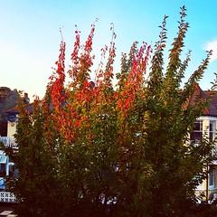 Autumn, you look so pretty already.