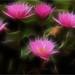 Water lily - Fractalius - DD0A9701-1000-frac