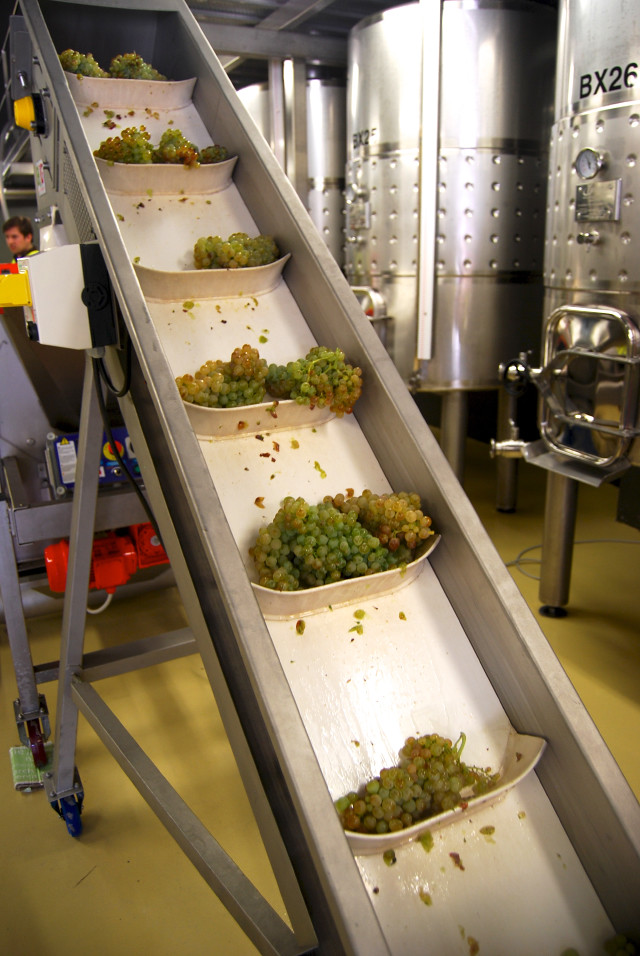 Grape Processing in Campo Viejo's Microwinery