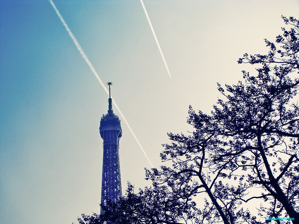 detail of the top of the tour eiffel and branches