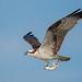 Fly Fishing - 1st Place Fauna - Beto Gutierrez