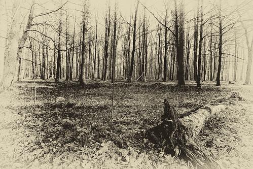 ireland winter look woods time antique tony kavanagh roscommon knockvicar