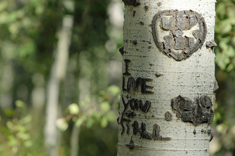 2014 9 24 - Wounded Aspen - IMG_4509