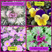 Fall Flowers and Plants - Lafayette Florist, Gift Shop & Garden Center