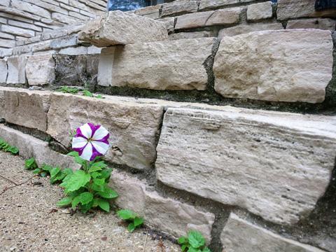 littleflower-0914