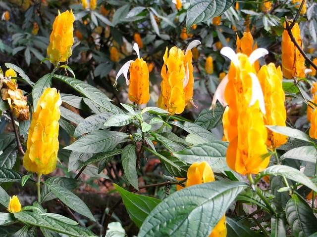 Waimea Falls Botanic Garden