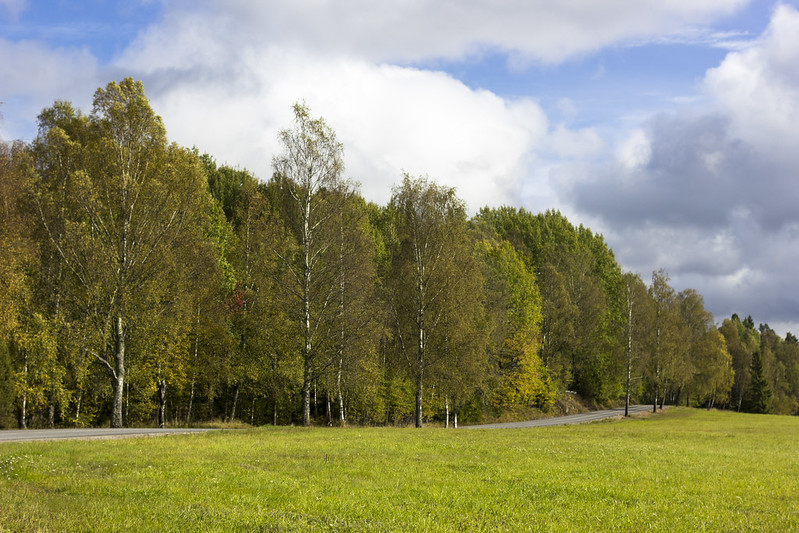 The Road To Tyresta