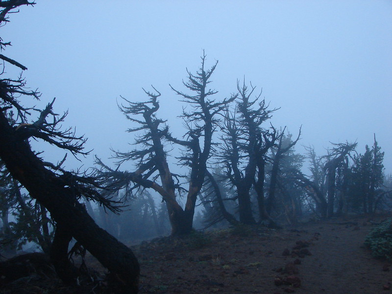 Trees near the summit of Tumalo Mountain