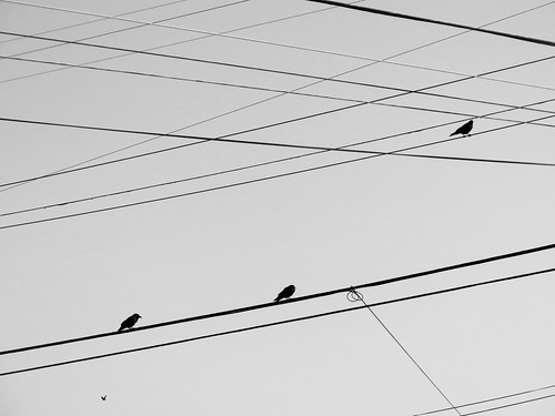 Birds and Lines