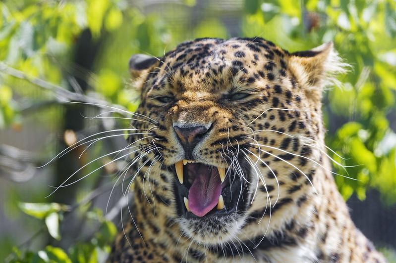 Leonie starting to yawn