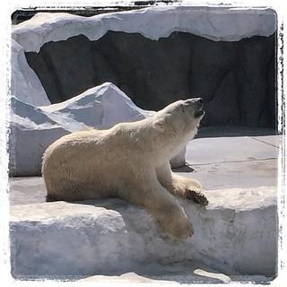 #japon #ueno #zoo