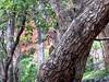 While climbing Sigiriya
