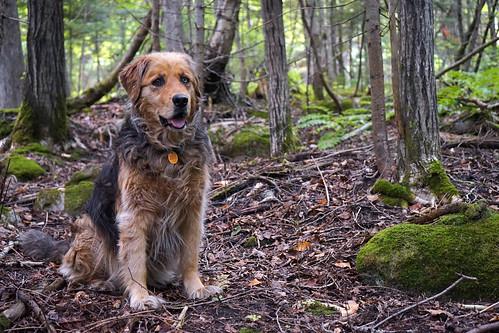 Maggie dans le bois