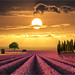 Pink lines by Jean-Michel Priaux