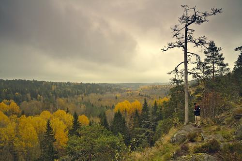 new autumn sky fall nature leaves yellow zeiss espoo suomi finland landscape leaf foliage nouveau nuuksio depressing noux yokfeed distagont2821