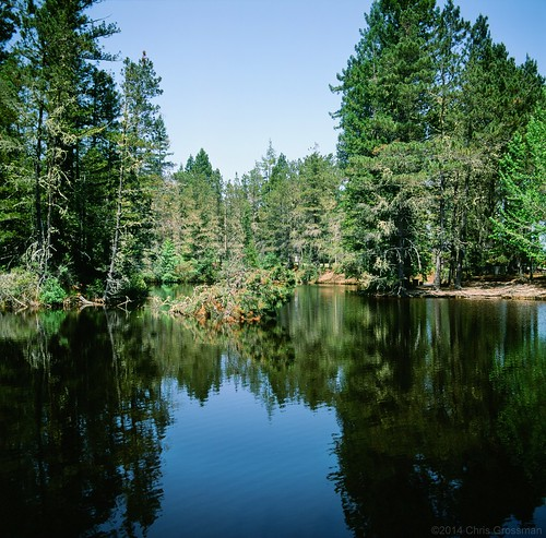 california park trees color reflection 120 6x6 film water pine analog zeiss mediumformat square t landscape 50mm pond analógica hasselblad velvia pines carl transparency 50 fujichrome e6 f4 cf duckpond gualala distagon 500cm velvia50 película hasselblad500cm mendocinocounty rvp50 fujichromevelvia50 81a cr56 ncps bowerpark chrisgrossman carlzeissdistagon50mmf4tcf northcoastphotographicservices