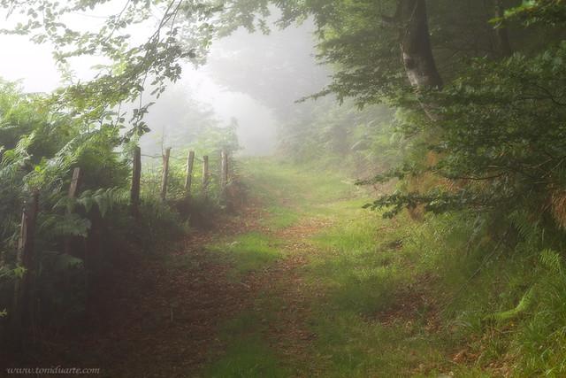Niebla en Roncesvalles