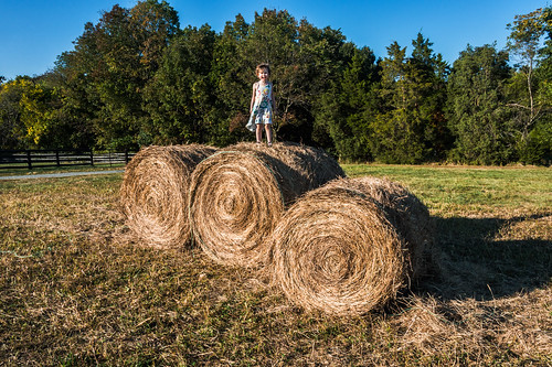 Queen of the Hay Bales by Geoff Livingston