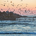 Ocean Shores Jetty with birds at Sunset, Washington State by Don Briggs