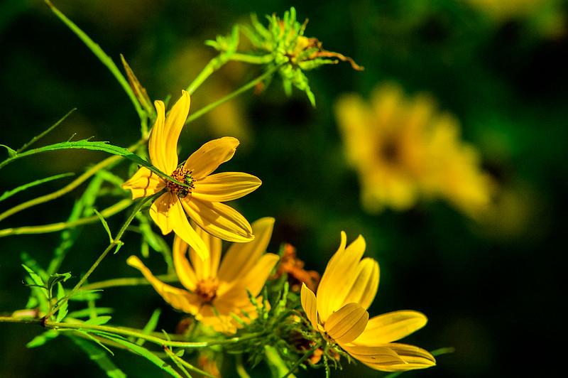 Minton Nature Preserve - September 20, 2014