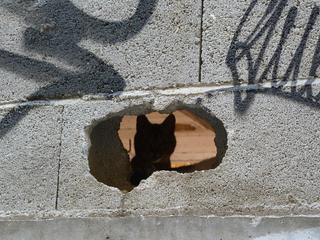Hidden cat. Granada, Andalucia, Spain.