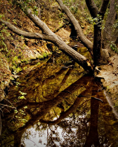 Oak Canyon