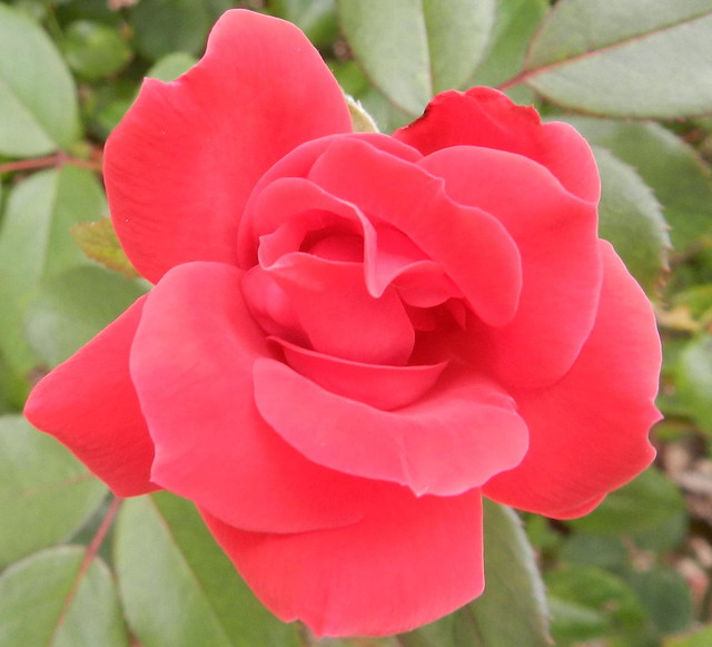 todaysflowersDSCN5661