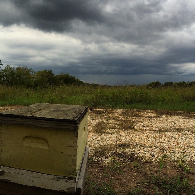 Friday view from my fave yellow hive - we love to see a storm brewing! #bees #beekeeping #sky #texas #gretchenbeeranch