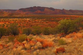 Western Desert Morning