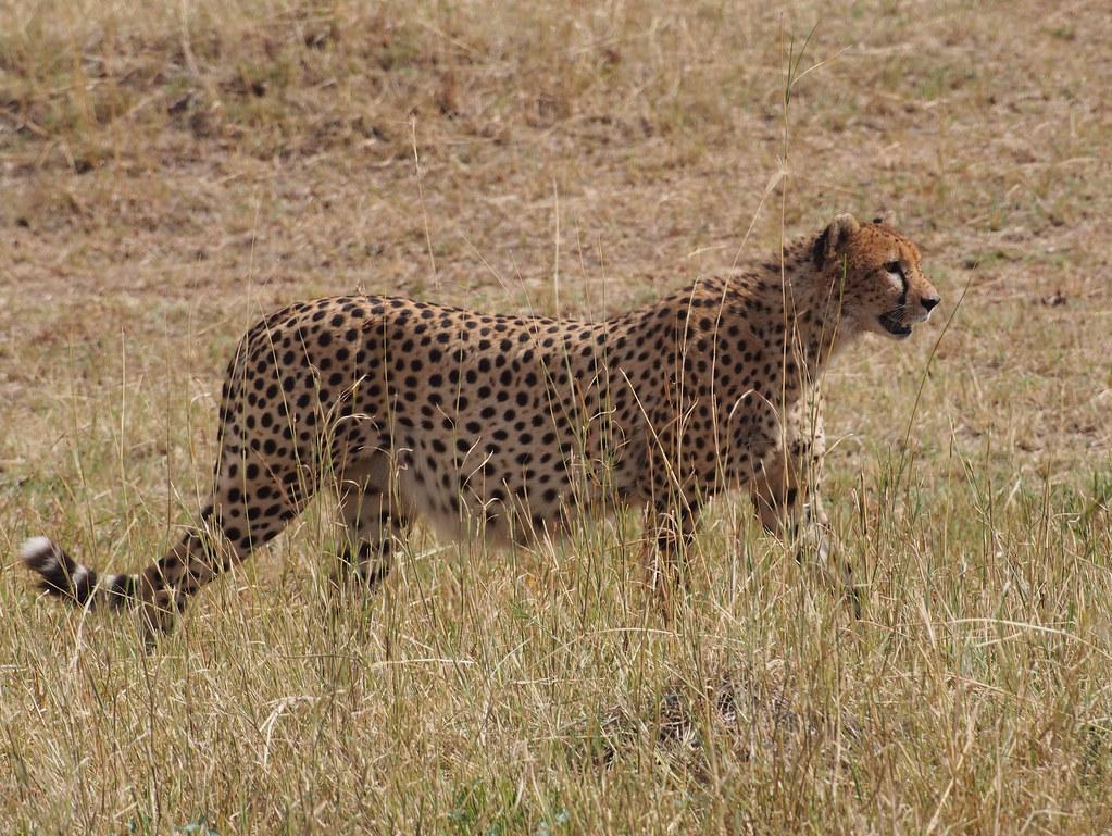 Afrikka 2363