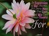 041_Thanks_&_Invitation_AR_34_pg38_600x480_Eleesha_Inspiration_Quote_Affirmation03