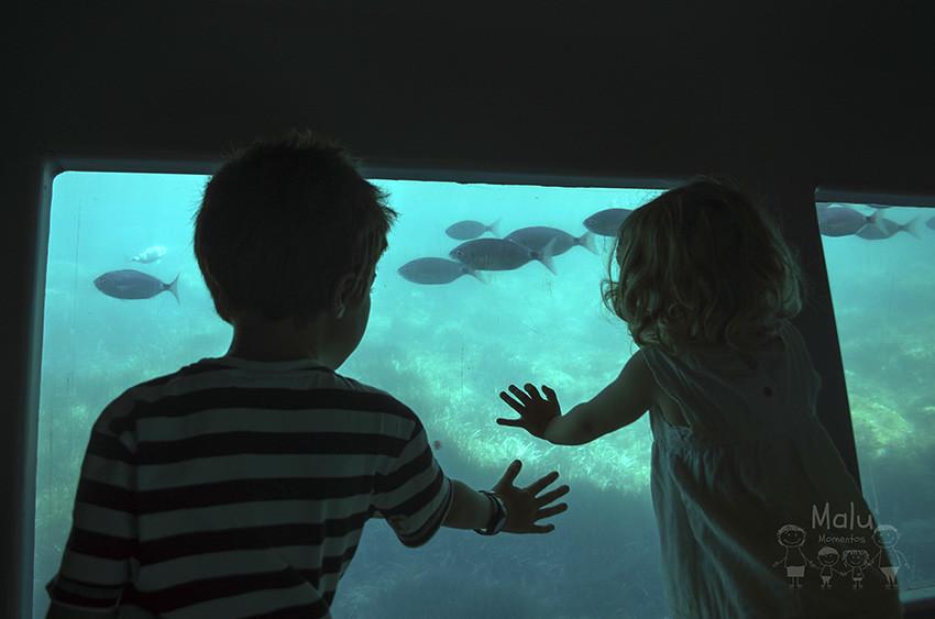 #19 Litel Pipol - Bajo el mar.
