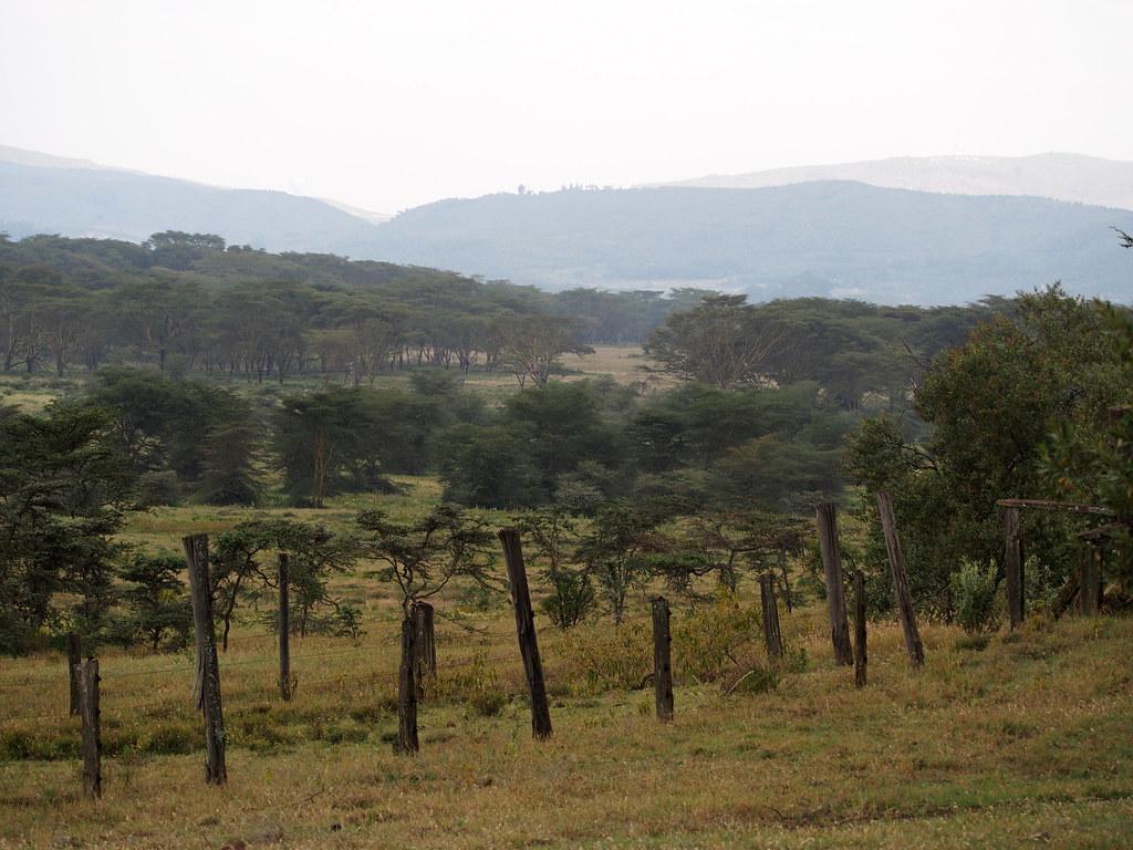 Afrikka 1405