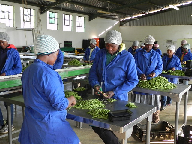 Processing baby vegetables at Sidemane Farm. Credit: Mantoe Phakathi/IPS