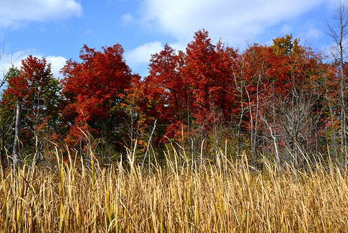 autumn trees red ontario nikon ottawa grasses ashton redtrees d610 goulbourn 24120