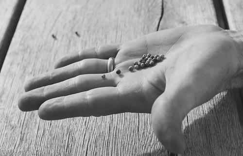 94/365. Seeds. Explore