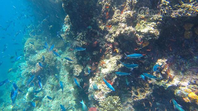 coral reef 0002 Raja Ampat, Papua, Indonesia