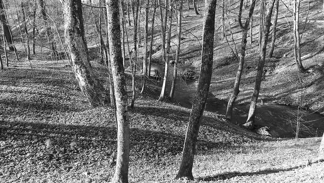 Spring in Dzukija Forests (33), Fujifilm FinePix S4000