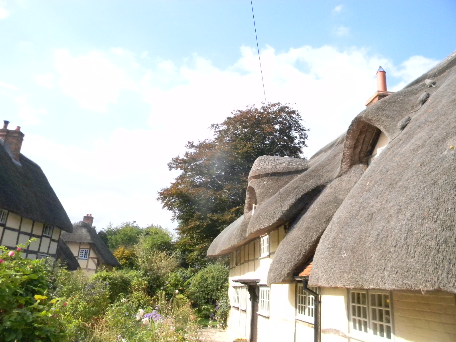 Thatch Cholsey to Goring