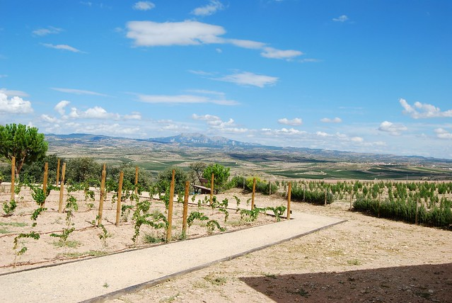 Views from Campo Viejo's Winery in Rioja