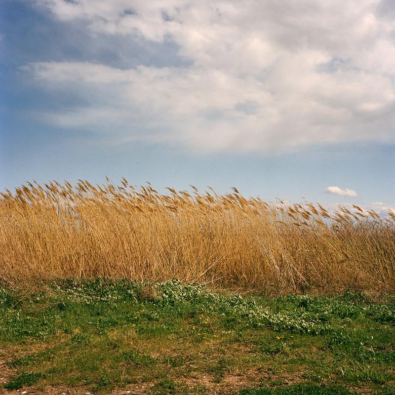Wind, Staten Island, NY, 2014