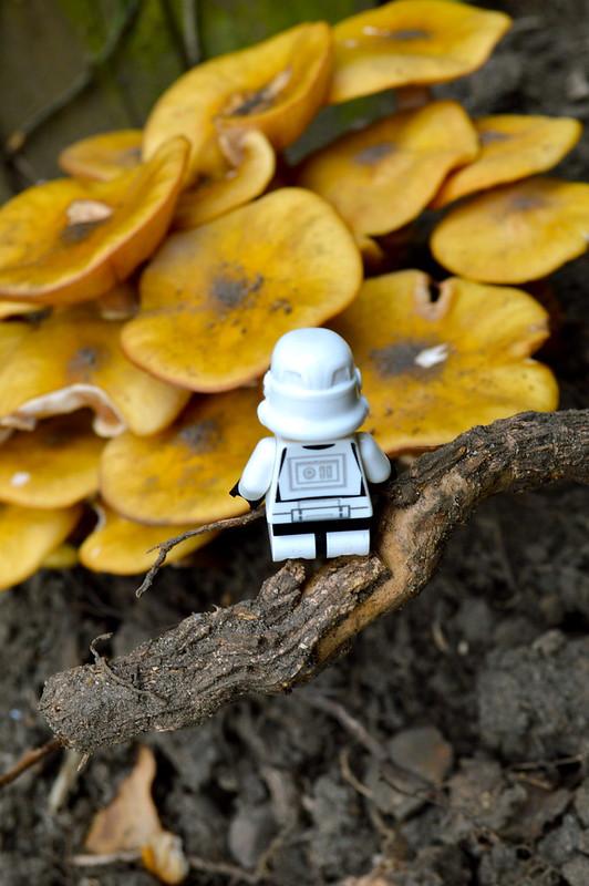 Stormtrooper September #23