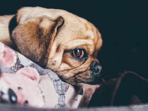Dog Dienstag!