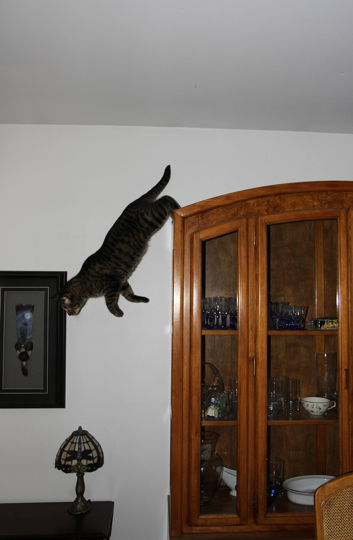 hunter jump