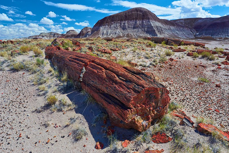 Long Logs - Petrified Forest National Park